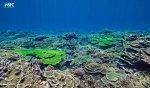 画像10: STC社製 水中撮影用フィルター アクアレッドフェーダー (10)